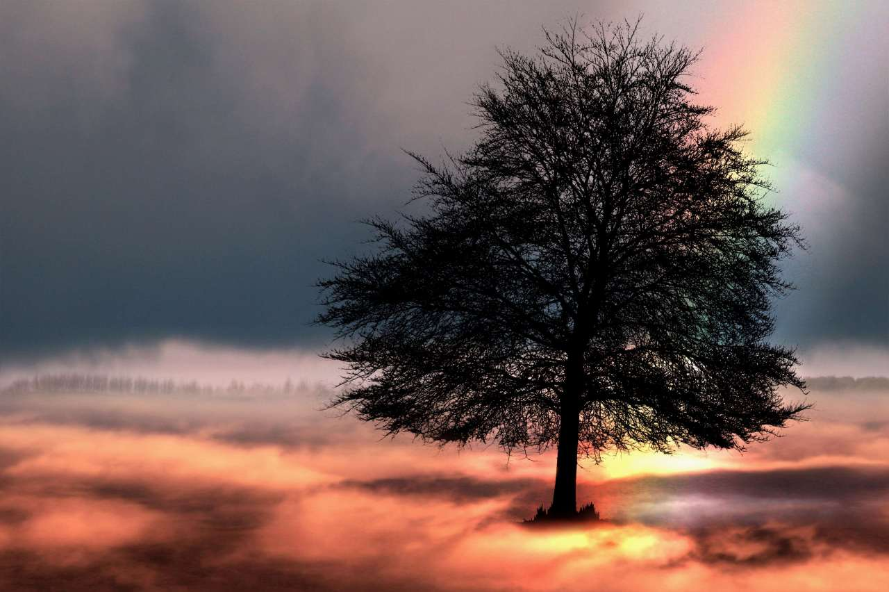 3088867-clouds_composing_dream_fairy-tales_fantasy_lonely_mood_mystical_nature_rainbow_sky_tree.jpg