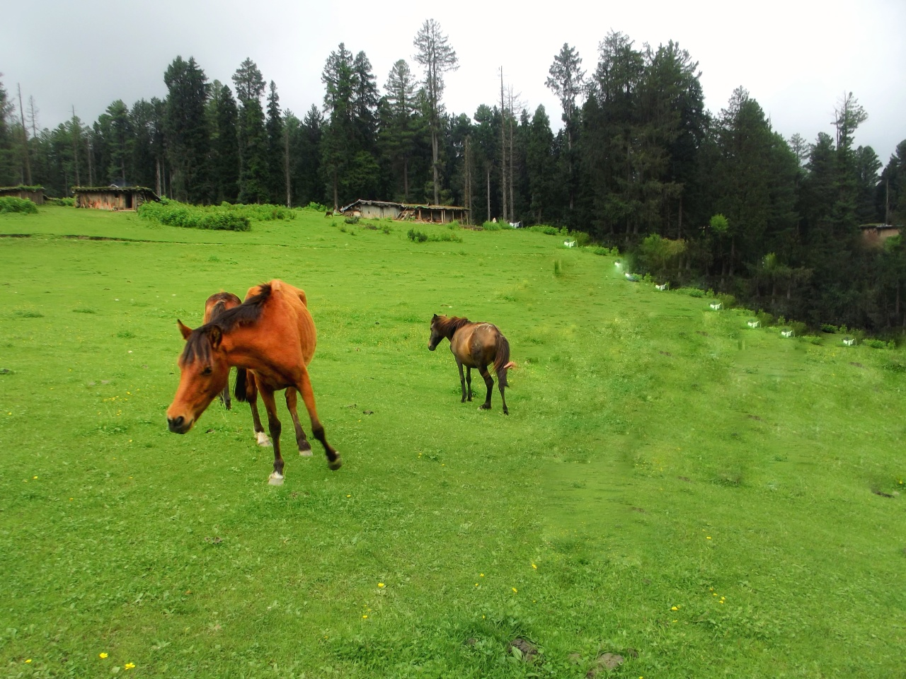 Yousmarg-The unexplored beauty of Kashmir Valley