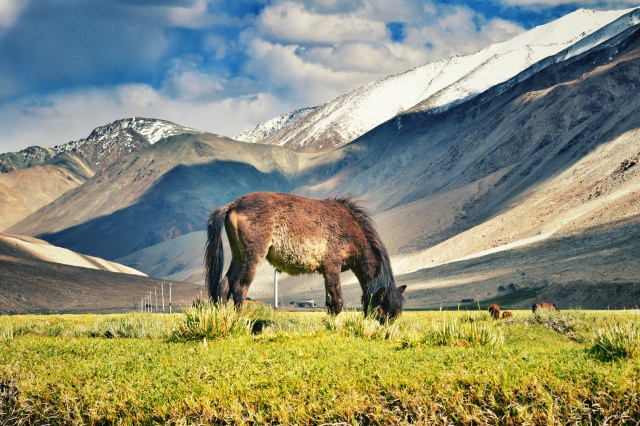 Ladakh 2.0